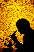 RESEARCHER LOOKING INTO A MICROSCOPE WITH NEUROLOGY SLIDE PROJECTED IN BACKGROUND. RESEARCH. SCIENCE. MEDICINE. NEUROLOGY- EPILEPSY.