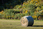 This image is a view of an Iowa hay bale nestled in rolling hills and picturesque fields as the autumn harvest season approaches. The early morning photograph was taken on an Iowa farm in mid-September.