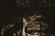 Root system of a large tree in Mossman Gorge, a 56,000 hectare area within Australia's Daintree National Park. (August 18, 2017)