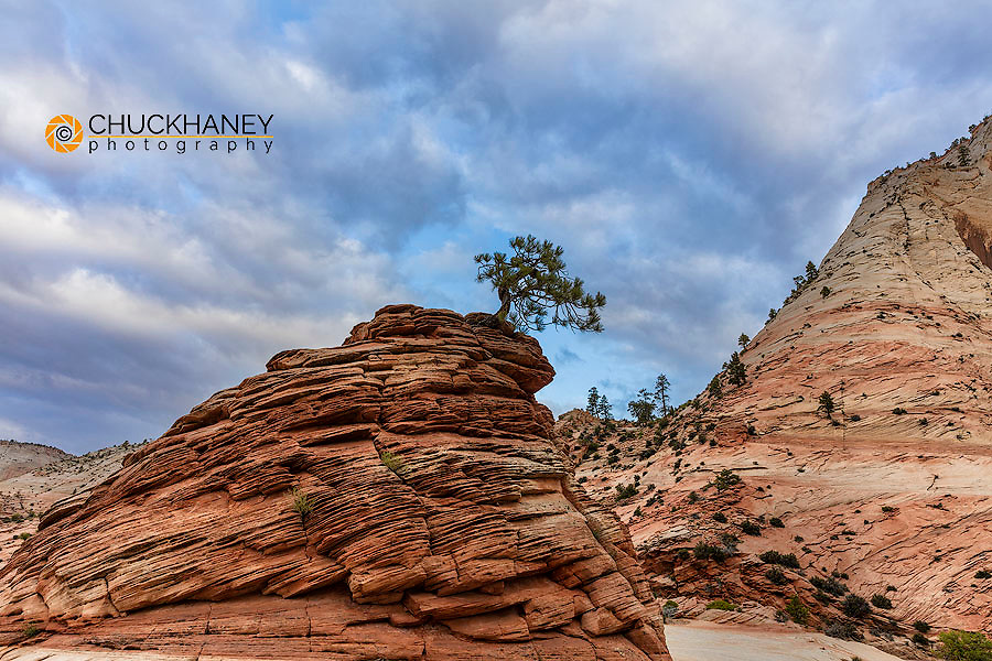 Lone tree on sandstone pedestal in Zion National Park, Utah, USA