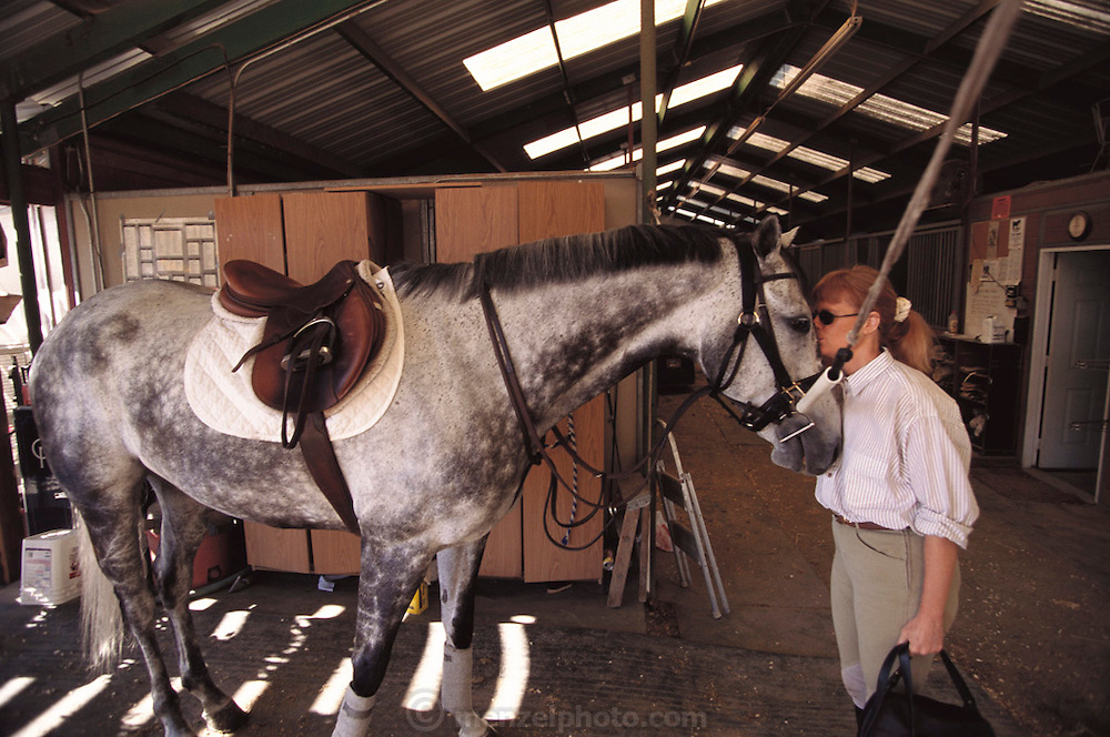 Silicon Valley, California; Deborah Rieman with one of her 6 horses. Deborah Rieman greets her horses Porsche 911 Targa Trade In (white and gray dappled, named from her trade-in that purchased the horse) and Adrenaline Rush (chestnut brown, named for the reaction to riding the horse) before taking them out for warm-up runs and jumps. The horses are two of Deborah's six that are housed at the Breakwell Charlebois Stable facility in Portola Valley, California. Model Released (1999).
