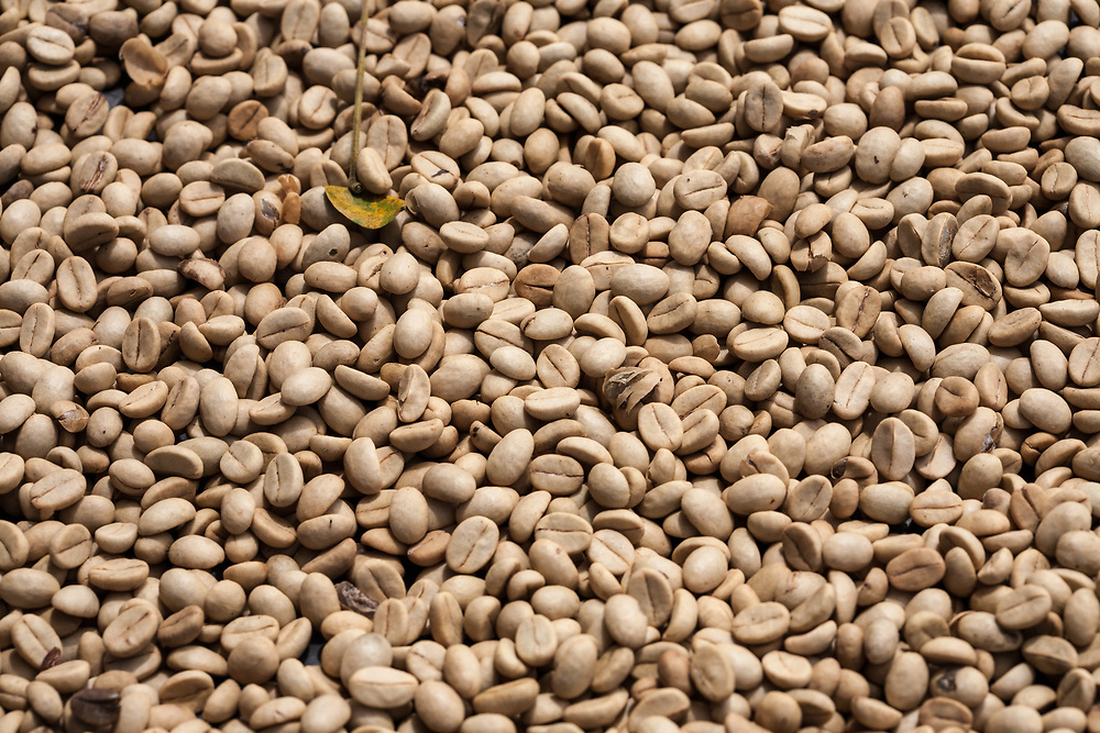 Coffee drying on a patio at the UCCEI coop, Matagalpa, Nicaragua. Fairtrade is an alternative approach to conventional trade and is based on a partnership between producers and consumers. The coop is Fairtrade-certified.