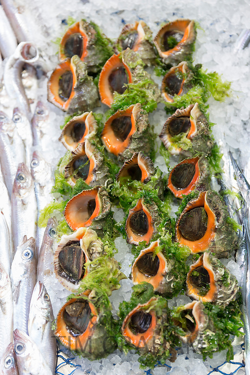 Fresh Salyangoz snails on sale in fishmonger fish shop in food market in Kadikoy district, Asian side of Istanbul, East Turkey