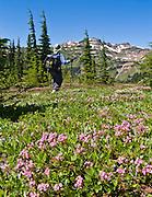 Hiking by pink heather flowers in Goat Rocks Wilderness Area, Washington. The peak is Hawkeye Point (7431 feet elevation).