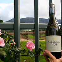 Africa, South Africa, Cape Town. Groot Constantia Wine and vineyards.