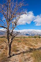 Manzanar National Historic Site Landscape, Independence, California