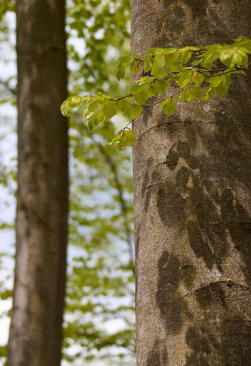 Voderadske Beechwood, E-30; 01/05/2010; 10 at f/3.4; ISO 200; white balance: Auto; focal length: 90 mm