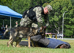 "MERIDIAN, Miss. (Aug. 14, 2018) Military Dog Handler Master-at-Arms 3rd Class Jonathan White demonstrates the capabilities of his military working dog (MWD) ""Baba"" on Master-at-Arms 3rd Class Dylan Pilkington as part of a MWD demonstration onboard Naval Air Station (NAS) Meridian. Baba is NAS Meridian's first MWD in 11 years with plans to expand the program to five dogs. (U.S. Navy photo by Mass Communication Specialist 1st Class Chris Liaghat/Released)180814-N-CH038-306"