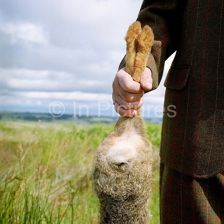 Gamekeeper Ronnie Grigor holding a hare at Fala estate, Midlothian, Scotland. Fala estate supplies game such as roe deer, hares, rabbits and wood pigeons to local restaurants.