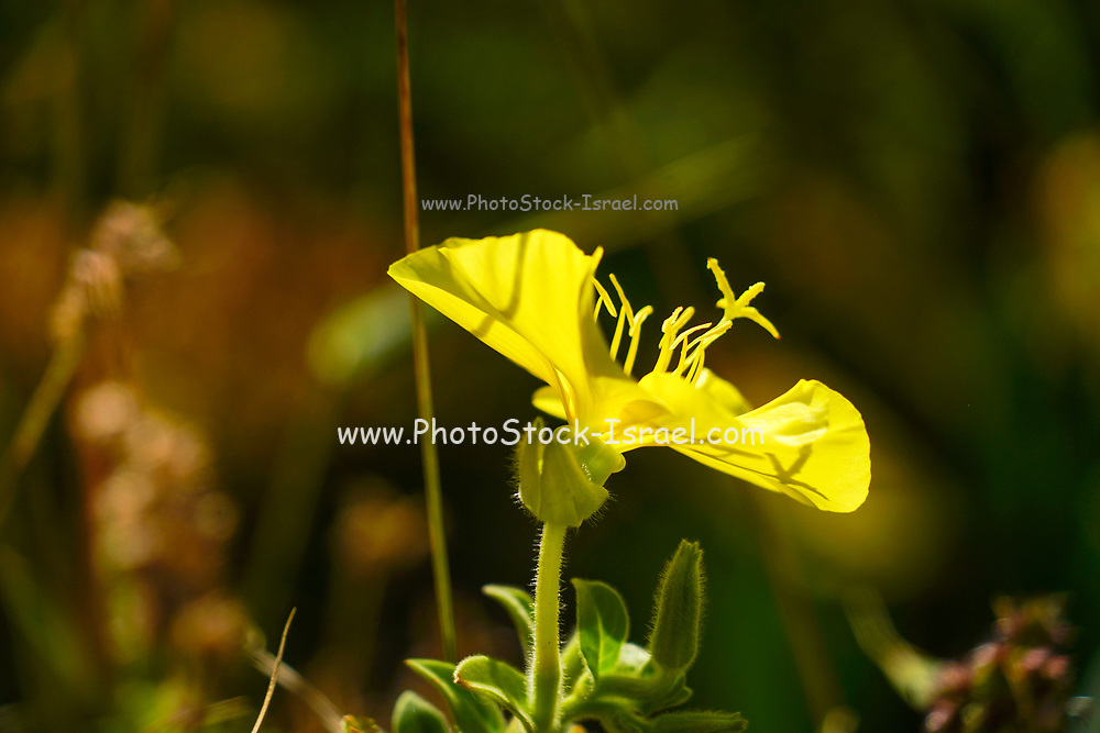 Closeup of a delicate yellow flower