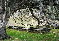 Alma Rosa Winery Ranch, in Buellton, California.