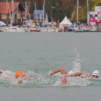 Members of Team Great Britain (in orange) and Team Hungary (in white) compete in the Junior Team 3 km competition of the FINA World Junior Open Water Swimming Championships in Balatonfured (about 132 km South-West from capital city Budapest), Hungary on September 07, 2014. ATTILA VOLGYI