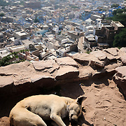 Stray dog sleeping close to Mehrangarh Fort