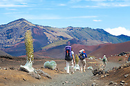 Haleakala National Park on the island of Maui, Hawaii, USA