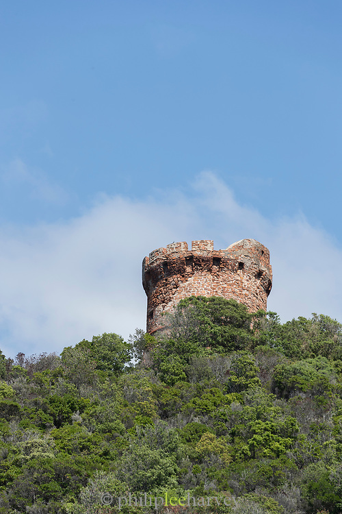 Low angle view of Genoese tower and trees, Scandola Nature Reserve, Corsica, France
