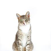 20170710 Michelle Cats