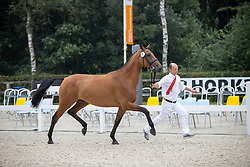 009, Mijn Sinaa<br /> Nationaal Kampioenschap KWPN<br /> 3 jarige springmerries<br /> © Hippo Foto - Dirk Caremans<br />  15/08/2020
