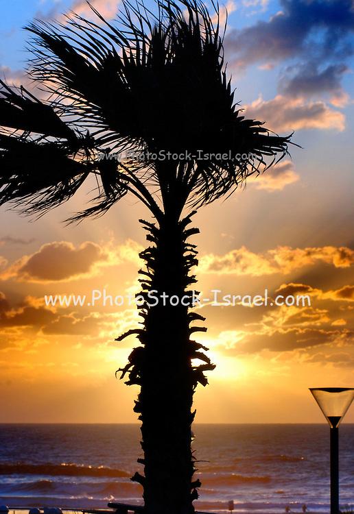 Palm tree at sun set