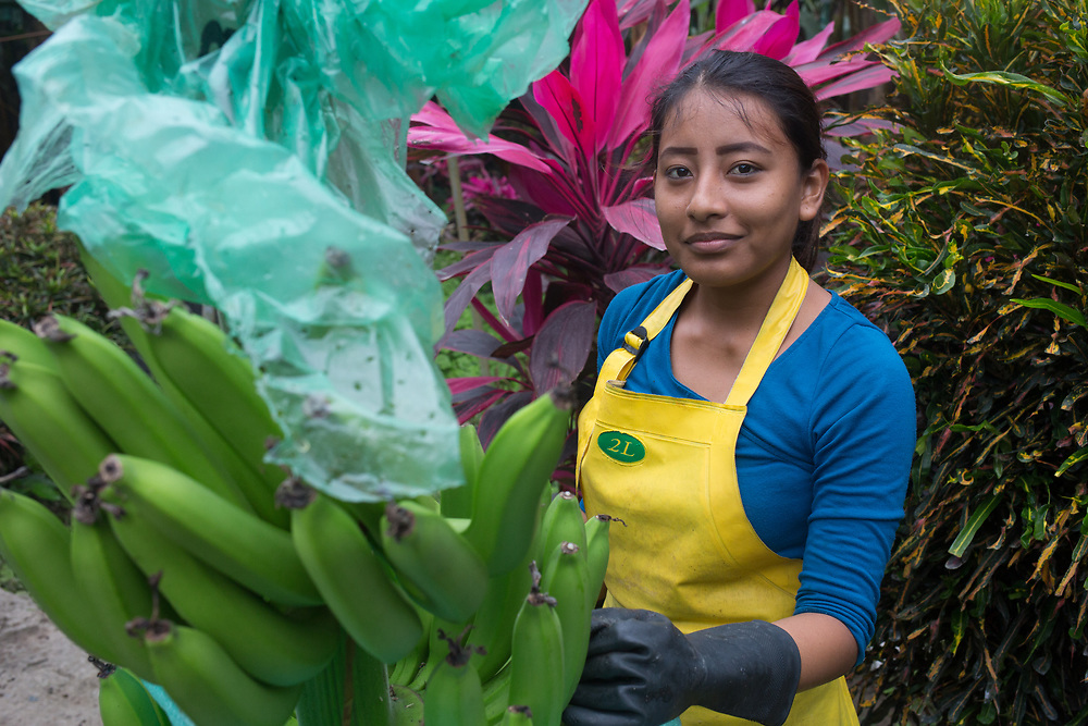Kathy Pérez, works at a banana packing station that is part of the Fairtrade-certified ASOGUA<br /> BO.