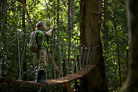 A boy (age 9) crossing the suspension bridge over the river at the research station in Gunung Palung N. P., Borneo.