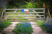 Bluebonnets and Lone Star gate near Llano in the Texas Hill Country.