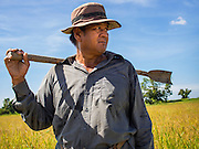 08 SEPTEMBER 2014 - BANG BAN, PHRA NAKHON SI AYUTTHAYA, THAILAND:  A farmer surveys his rice field during the harvest in Ban Bang, Phra Nakhon Si Ayutthaya province. Rice farmers in central Thailand are harvesting their rice crop. The race is on to get the rice harvested before the Chao Phraya River and its tributaries start their cycle of annual floods. Although the central plains have gotten less rain than normal, communities in northern Thailand are experiencing a heavy monsoon and flood gates upriver of the central plains have been opened. The flood waters are expected to reach Phra Nakhon Si Ayutthaya province by the middle of September. This year's rice crop is expected to be lower than last year's because many farmers planted less rice because the government subsidy program ended.     PHOTO BY JACK KURTZ