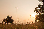 Man riding elephant at sunset in Satpura National Park, India