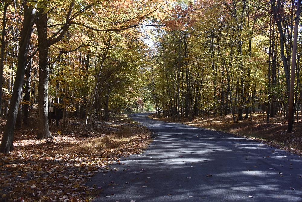 West Virginia autumn trees at sunset