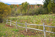 Wildflowers and rustic wooden fence in rural scene near Stowe in Vermont, New England, USA
