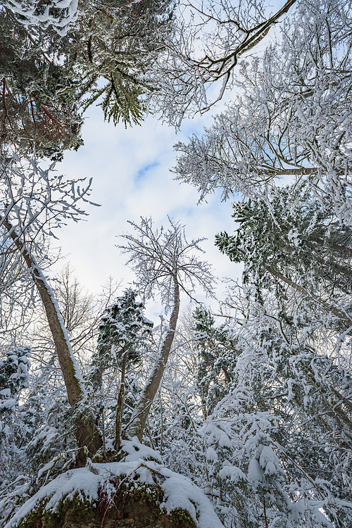Snowy tree branches against the sky in winter day, Gauja National Park (Gaujas Nacionālais parks), Latvia Ⓒ Davis Ulands | davisulands.com