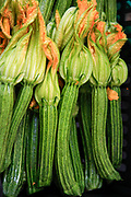 Flowers of zucchini