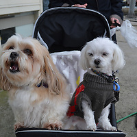 Mornington Yacht Club Pets Day