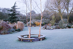 Curved bench seats around three birch trees - Betula nigra 'Heritage' on a frosty morning. Design: John Massey, Ashwood Nurseries