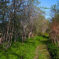 North America, Canada, Nova Scotia, Guysborough. A portion of the Trans-Canada Trail through Guysborough.