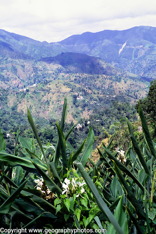 Tropical landscape rainforest and steep farmland in Blue Mountains, Jamaica, West Indies, 1990