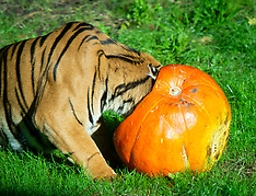 ZSL London Zoo Hallowe'en 17th October 2019