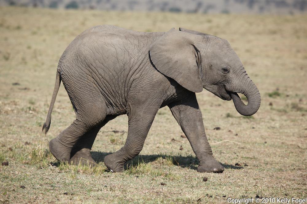 Maasai Mara National Park, Kenya 2010 african wildlife