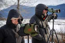 Rachel Wheat, a graduate student at the University of California Santa Cruz (left) and Steve Lewis, Raptor Management Coordinator, U.S. Fish & Wildlife Service, use spotting scopes to check on leg snare and net launcher traps they set on the gravel bar of the Chilkat River. The traps are being used to capture bald eagles that will be used in a study being conducted by Wheat. Once the traps are set, it is a matter of waiting -- and waiting. On some days no eagles were caught, on others, only one or two were caught. Wheat is conducting a bald eagle migration study of eagles that visit the Chilkat River for her doctoral dissertation. She hopes to learn how closely eagles track salmon availability across time and space. The bald eagles are being tracked using solar-powered GPS satellite transmitters (also known as a PTT - platform transmitter terminal) that attach to the backs of the eagles using a lightweight harness. During late fall, bald eagles congregate along the Chilkat River to feed on salmon. This gathering of bald eagles in the Alaska Chilkat Bald Eagle Preserve is believed to be one of the largest gatherings of bald eagles in the world.