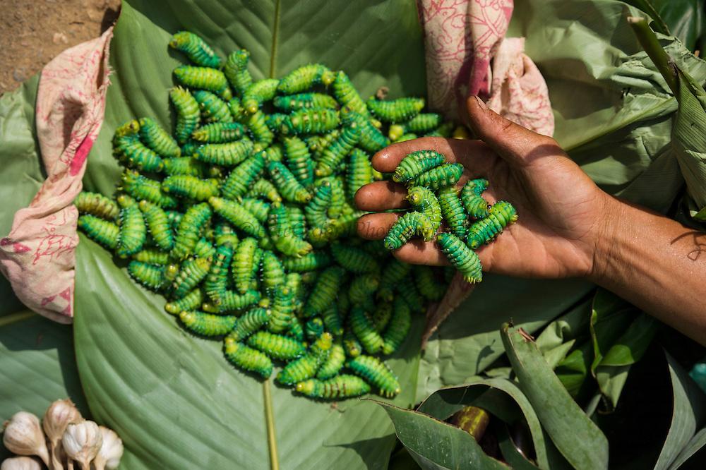 Silkworm caterpillars for eating<br /> Sohra Market, Cherrapunji<br /> Meghalaya,  ne India