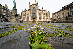 Edinburgh Old Town, seen here at St giles Cathedral,  deserted during Covid-19 lockdown, Scotland UK