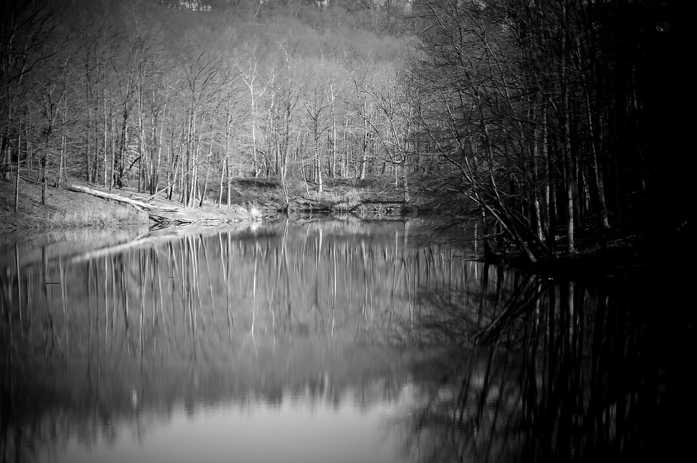 Reflection of trees in late fall pond just stopped me in my tracks.