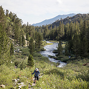 Hiking out of Mosquito Flats on the Ruby Lake trail that eventually leads to Mono Pass and the backcountry. The popular trail is accessed via Rock Creek Road off of Highway 395