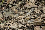 A Tiger Heron (Tigrisoma mexicanum) blends into the rocks. Raspacullo river, Belize.