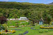 Formal Flower Gardens (4 on the map, looking north) with annual bedding plants in the Victorian tradition in the Flower Garden area of The Victorian Walled Garden at Kylemore Abbey. Plants include: Tagetes - French Marigold, Lavatera trimestris - Mallow, Calendula - Pot Marigold, Lobelia, Tropaeolum - Nasturtium and a Araucaria araucana - Monkey puzzle tree. Only plants and flowers that were introduced to Ireland before 1901 are used in the gardens. The 6 acre garden is to the west of the Abbey originally known as a castle when it was built by Mitchell and Margaret Henry in the 1850's. The garden is on a south slope at the foot of Duchruach Mountain and facing Diamond Hill. It was chosen as the warmest and brightest spot on the estate with a mountain stream providing water. It is now a Benedictine community; open seven days a week all year round. The Abbey is located in Connemara in the west of Ireland. August