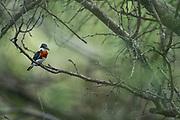 Wildlife photography from World Birding Center, Edinburg, Texas, USA