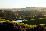 view of Carneros vineyards from a Napa knoll top vineyard. Napa, California