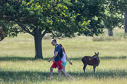 Licensed to London News Pictures. 16/06/2021. London, UK. Walkers enjoy the sunshine in Richmond Park, southwest London this morning as weather forecasters predict a 30c scorcher today before storms hit the UK tonight. The Met Office have issued a four day yellow weather warning for thunderstorms and heavy rain for London and the South East with the possibility of lightening strikes and flooding of properties putting an abrupt end to the hot weather. Photo credit: Alex Lentati/LNP