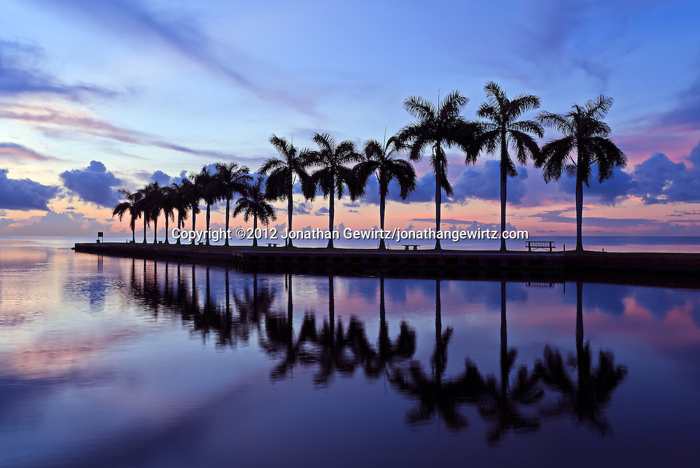 Looking out over a row of palm trees on Biscayne Bay, a few minutes before sunrise. Charles Deering Estate at Cutler, Miami, Florida. WATERMARKS WILL NOT APPEAR ON PRINTS OR LICENSED IMAGES.