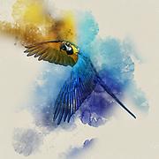 Digitally enhanced image of a blue parrot in flight