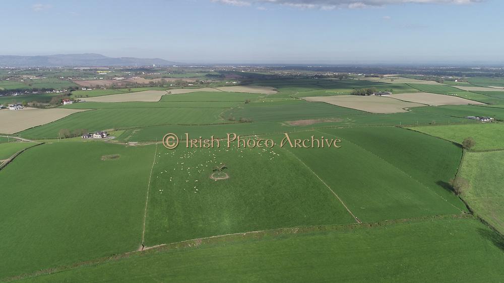 lone, bush, county, louth, sheep, field, lone, bush, county, louth, sheep, field, lone, bush, county, louth, sheep, field, aerial photos